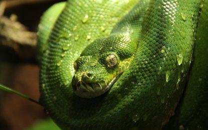 Python adesso è il linguaggio di programmazione preferito dai pirati