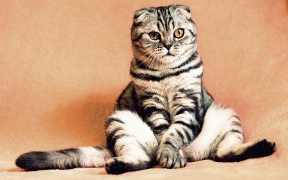 Usate Android? Attenti alle foto coi gattini!