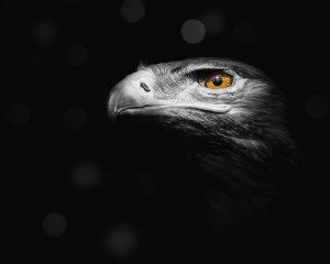 Il trojan Stealth Falcon sfrutta le funzioni di Windows Update