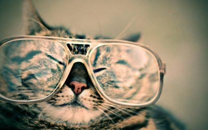 Attacco Meow fa strage di database esposti. È un vigilante?